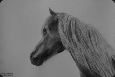 horse_portrait_1