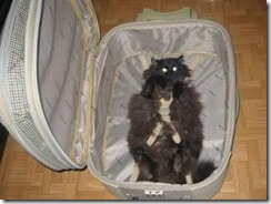 take me with cat