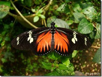 110528 X Schmetterlingsfarm (5)