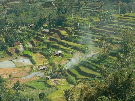 Bali photo: Rice pads