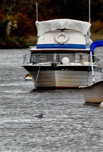 6. boat and bird-kab