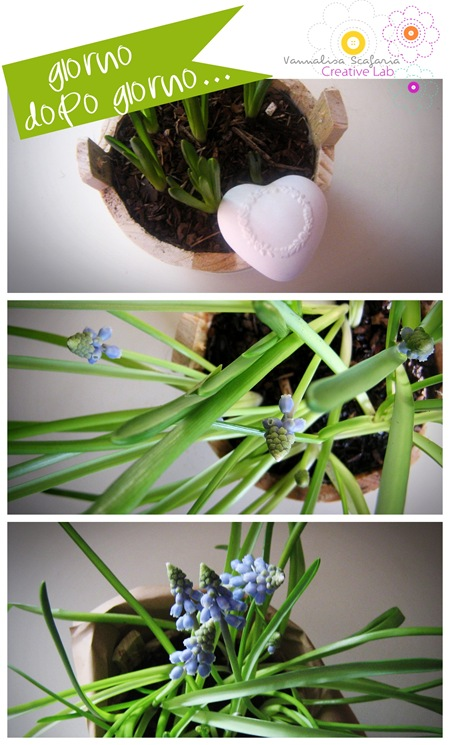 bulbs_vannalisascafaria_growing_with_love2