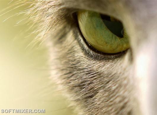 И необычный в который сами кошки