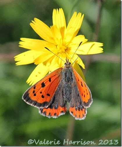 12-small-copper