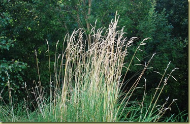 Fall 2011 - grass