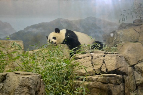 NationalZoo_4