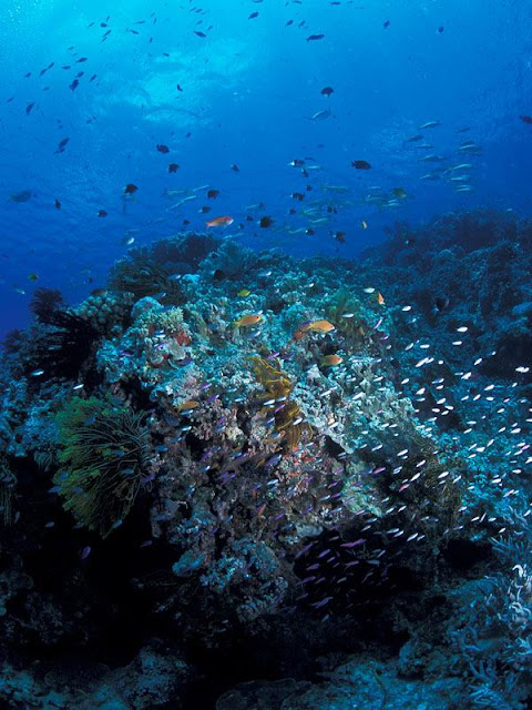 Great Barrier Reef Coral Garden and tropical fish.jpg
