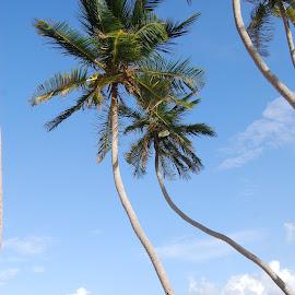 Bottom Bay,Barbados by Tony Steele - Landscapes Beaches ( bottom bay barbados )