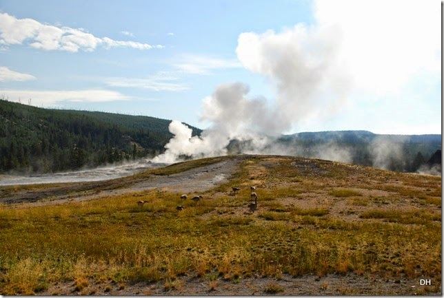 08-08-14 B Yellowstone NP (82)