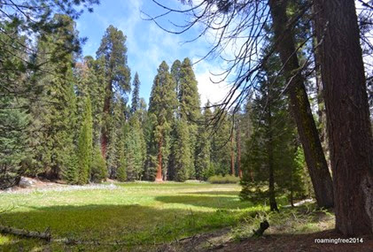 Meadow surrounded by tall trees