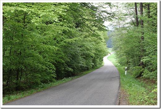 120506_beech-forest_05