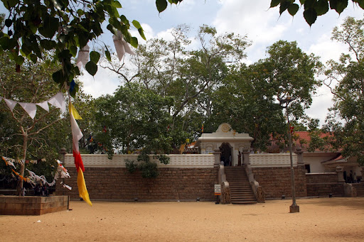 Sri Maha Bodhi (the sacred bodhi tree)