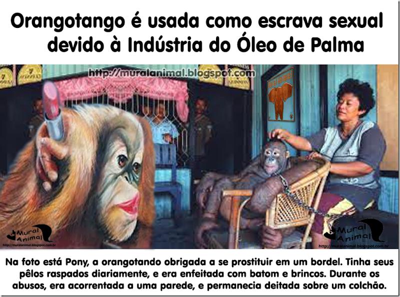 orangotango-escrava-sexual