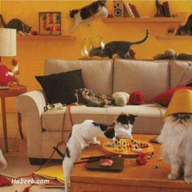 Bila kucing mengamuk !