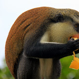 Devouring A Banana - St. George's, Grenada