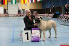 20130511-BMCN-Bullmastiff-Championship-Clubmatch-1634.jpg