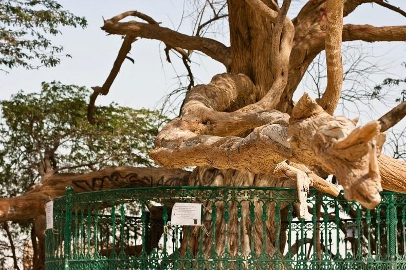 tree-of-life-3
