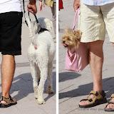 Sort... chien et short... toutou
