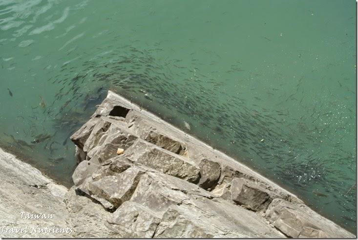 坪林觀魚步道 (2)