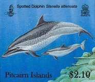 dolphins210c