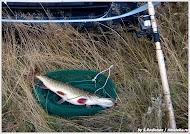 Рыбалка. Фото С. Родионова. www.timeteka.ru