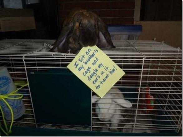 bunny-rabbit-shaming-2