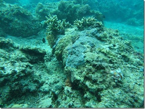 12 11 Bali (713) Gili Trawangan Tassled Scorpion Fish
