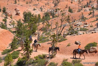 Mules and horses coming up the trail