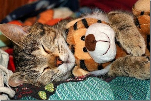 cats-stuffed-animals-22