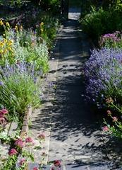garden june 2011 003