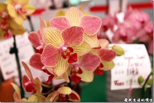 2012台南蘭花展24