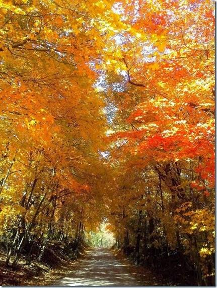 autumn-colors-fall-028