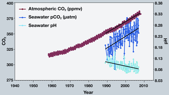 This graph shows the correlation between rising levels of carbon dioxide (CO2) in the atmosphere at Mauna Loa with rising CO2 levels in the nearby ocean, at Station Aloha. As more CO2 accumulates in the ocean, the pH of the ocean decreases. (Modified after R.A. Feely, Bulletin of the American Meteorological Society, July 2008.) pmel.noaa.gov