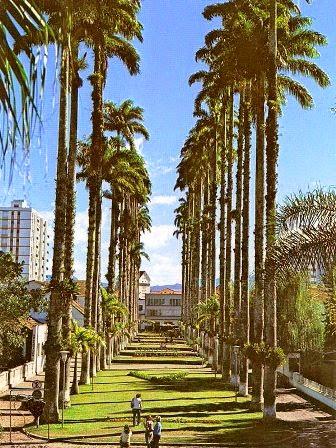 rua das palmeiras 1970