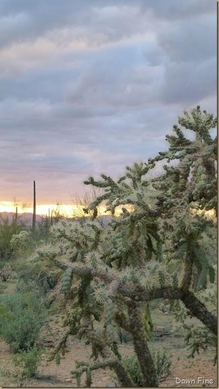 Saguaro NP West_095