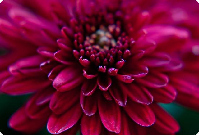 Ruby flower 2