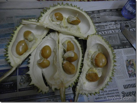 3 Durian D24