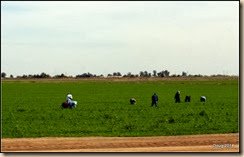 Migrant workers in a fieod.