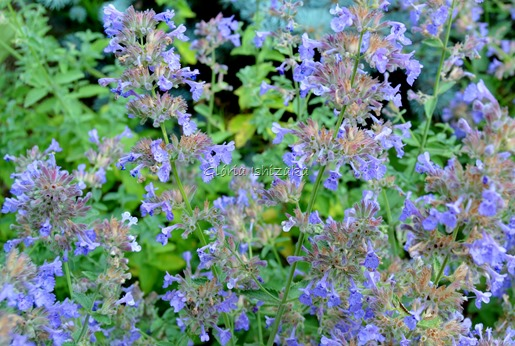 Azul - Glória Ishizaka 13