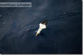 TRIDENS_Schaber-1