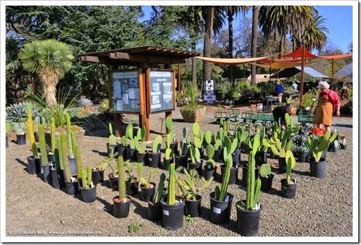 Succulents and More Expanded retail nursery at the Ruth Bancroft