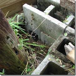 DSC07543 Skunk 1