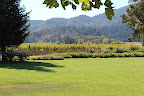 Rutherford Grove Winery is absolutely stunning in its simplicity. Five minutes off the St.Helena highway, the views of the mountains just suck you right in.