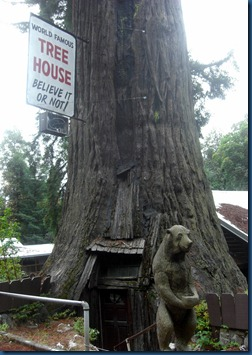 Redwoods (16)