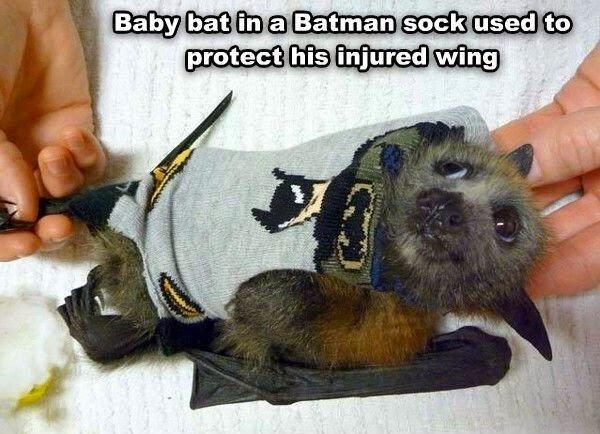 Baby Bat in a Batman Sock via FashionablyGeek