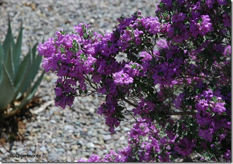 purple bush