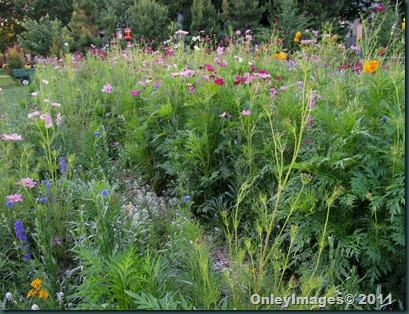 meadow0701