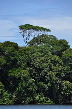 Obiective turistice Costa Rica: Pe canalele din Tortuguero