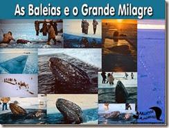 milagre-baleias_thumb[1]