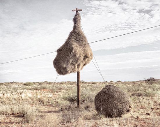 Ninhos postes 09
